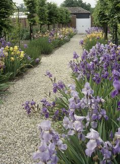 Country Landscaping Photo - Lonny ( here is crushed stone for a path.  This would be more care but would hurt little knees less if they fell.)