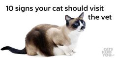 Cats instinctively hide illness, so it is important to know the signs that might mean a vet visit is necessary.