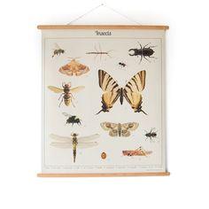 Insecten op een vintage look schoolplaat van Nieuweschoolplaten. Prachtige afbeeldingen, mooie afwerking en met houten latjes; wat zal deze poster mooi hangen!