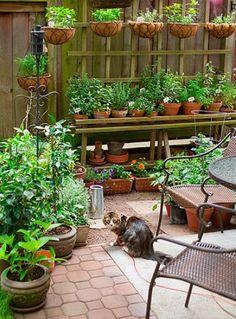 garden inspiration - Sök på Google
