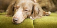 The 10 Best Songs to Help You Fall Asleep Faster SleepPhones Sleeping Songs, Sleep Rituals, Sleep Talking, Cushing Disease, I Love Sleep, How To Sleep Faster, Pet News, Best Songs