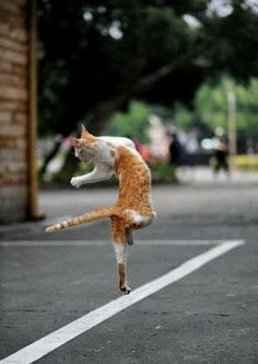 dancing cat, who said cats can't dance Funny Cats, Funny Animals, Cute Animals, Crazy Cat Lady, Crazy Cats, I Love Cats, Cool Cats, Kittens Cutest, Cats And Kittens