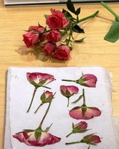 Microwave flower pressing (via marthastewart.com)