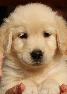 Gorgeous puppy!