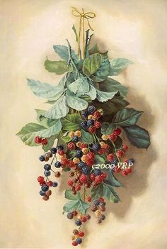 Print FREE SHIP Fruit Print French by VictorianRosePrints on Etsy, $11.99