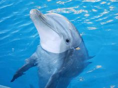 dolphin free wallpaper and screensavers