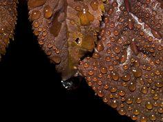 Drops on leaves 2 by Mackingster.deviantart.com on @DeviantArt