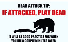 Bears... #nyctalking #humor