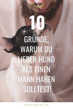 Die ultimativen 10 Fakten sich lieber einen Hund als einen Mann anzuschaffen :)  Hundesprüche & Zitate rund um den Hund entdecken