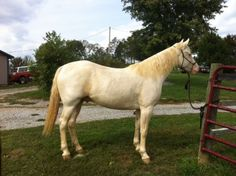 KY Mountain Horse - $800 (Mt Sterling)