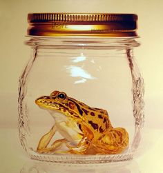 frog in mason jar hyper realistic painting Young sung Kim