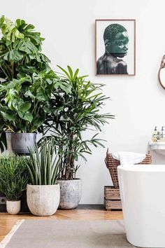 Dark Green Foliage - From stylish paint projects to game-changing accessories, the H&G guide to refreshing your home on a budget - interiors on HOUSE by House & Garden