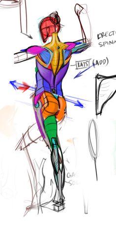 life drawing and anatomy