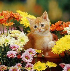 Ginger kitten and flowers