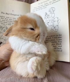 Baby Animals Super Cute, Cute Baby Bunnies, Pretty Animals, Cute Little Animals, Cute Funny Animals, Cute Cats, Cute Babies, Baby Animals Pictures, Cute Animal Pictures
