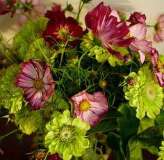 Growing a Cut Flower Garden