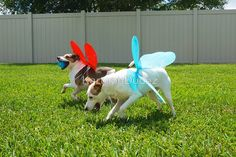 Dottie and Cede in their butterfly wings playing fetch