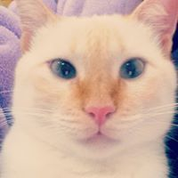 Alemoa Cat Red Poit