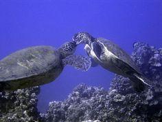 sea turtles :) they're like whooooaaaa mother fuckaaaaa