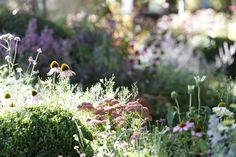 """The New Wave"" by Ian Barker Gardens, Melbourne International Flower & Garden Show 2013 Garden Design Images, Landscape Design, Garden Show, Summer Garden, Hampton Garden, Formal Gardens, Garden Borders, Climbing Roses, Flower Show"