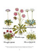 DoverPictura - 120 Great Botanical Plates of Basilius Besler