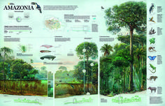 Amazonia, Vital and Fragile, diagram created 2015.