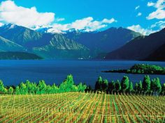 Fantastic vineyards. Click to read and see more.
