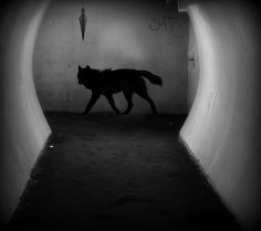 "Image Spark - Image tagged ""wolf"", ""dream"", ""silhouette"" - sleeprunner"