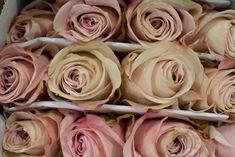 Secret Garden - Blush Roses at-New-Covent-Garden-Flower-Market - Flowerona