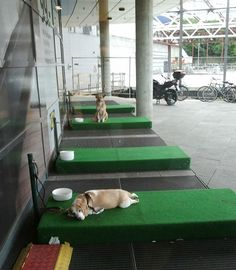 Ikea has created special spots for your dogs outside the store while you shop. How do you feel about this? Would you bring your dog along knowing that?