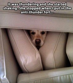 Attack Of The Funny Animals – 25 Pics