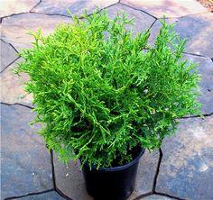 That hertz midget and evergreen consider