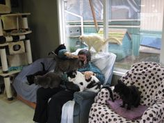 Kitty Comforter at one of the largest cat sanctuaries in North America located In Richmond,BC-Richmond Animal Protection Society. Me & a few friends #IMACRAZYCATLADY