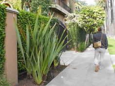 「西海岸 庭」の画像検索結果