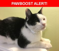 Please spread the word! Pirate was last seen in Daly City, CA 94015.  Description: Neutered male 11 y.o. cat, black and white short haired, very friendly. Last seen wearing white and gray collar  Nearest Address: 372 Imperial Way, Daly City, CA, United States