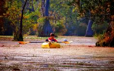 5 Picture Perfect #Kayak and Canoeing Destinations in North Carolina #NC #outdoors
