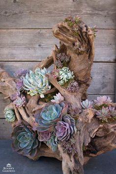 succulent garden care Amazing succulent ideas in 40 spectacular designs - decoration ideas - Simple Tips materials tests link -