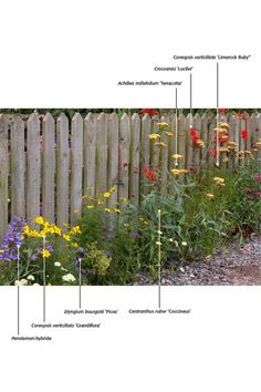 Gilles clement bioswale google search plans for Herbaceous border design examples