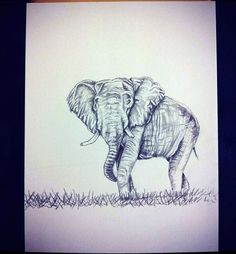 Nicole Walters Art - elephant sketch
