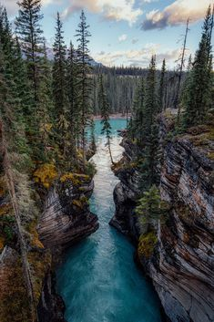Everything you need to know about travelling along the Icefields Parkway in Canada: top photography spots, best hikes, accommodation options and useful travel tips. Forest Photography, Photography Guide, Travel Photography, Canadian Travel, Canadian Rockies, Canadian Forest, Canada Holiday, Yoho National Park, Perfect Road Trip