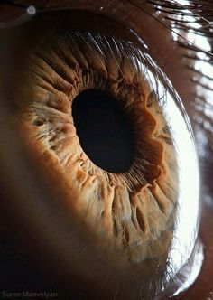 We look through this every hour of every day. But yet we never take the time to have a closer look at the eyes itself