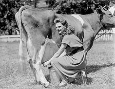 Naturally boosting my milk production with Mother's Milk tea. - The Elliott Homestead Champs, Mothers Milk Tea, Miniature Cattle, Organic Beef, Mini Farm, Cow Art, Small Farm, Farm Yard, Survival Skills
