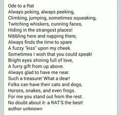 Rattie poem