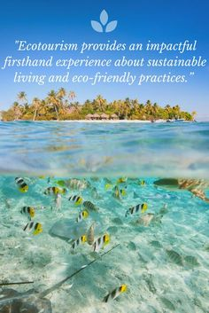 Sustainable travel is one of the biggest travel trends right now, but it may be doing more harm than good. Read this blog post to find out how you can be a truly eco-friendly traveler!