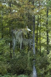 How to Process Spanish Moss