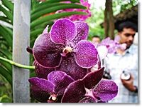 Chiang Dao Cave & Karen Long Neck village    Leave from hotel and driver up to the north of Chiang Mai. fresh up your morning at orchid farm to touch and atmosphere of colourful archids blooming.