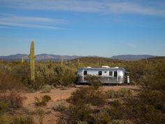 Airstream nestled amongst saguaros