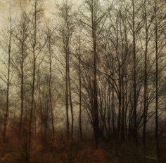 Silence by Sarah Jarrett, via Flickr