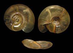 Bap, Snail, Horn, Action, Content, Celestial, Group Action, Horns, Slug