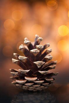 Pine Cone (not an acorn) / Brown Amber Bokeh Autumn Day, Autumn Leaves, Autumn Nature, Soft Autumn, Fotografia Macro, Autumn Aesthetic, Autumn Photography, Tattoo Photography, Seed Pods